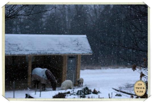 129twigandvine_snowfall