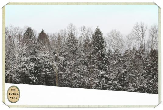 129twigandvine_snowfall3