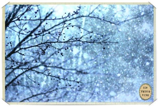 129twigandvine_snowfall4