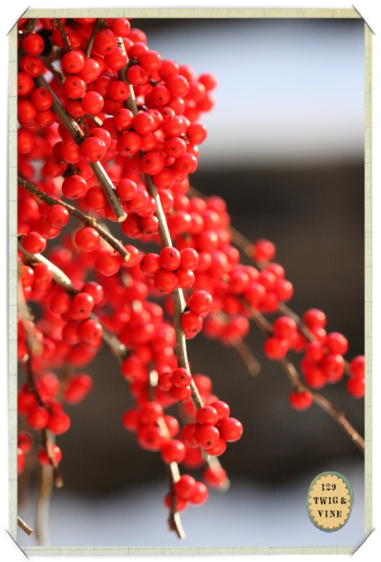 129twigandvine_winterberry
