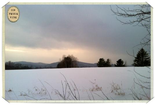 129twigandvine_snowfield