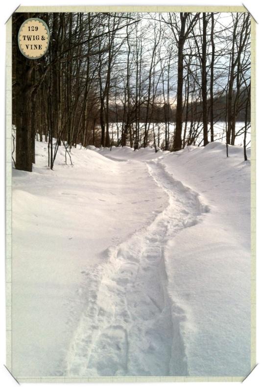 129twigandvine_snowshoe_trail