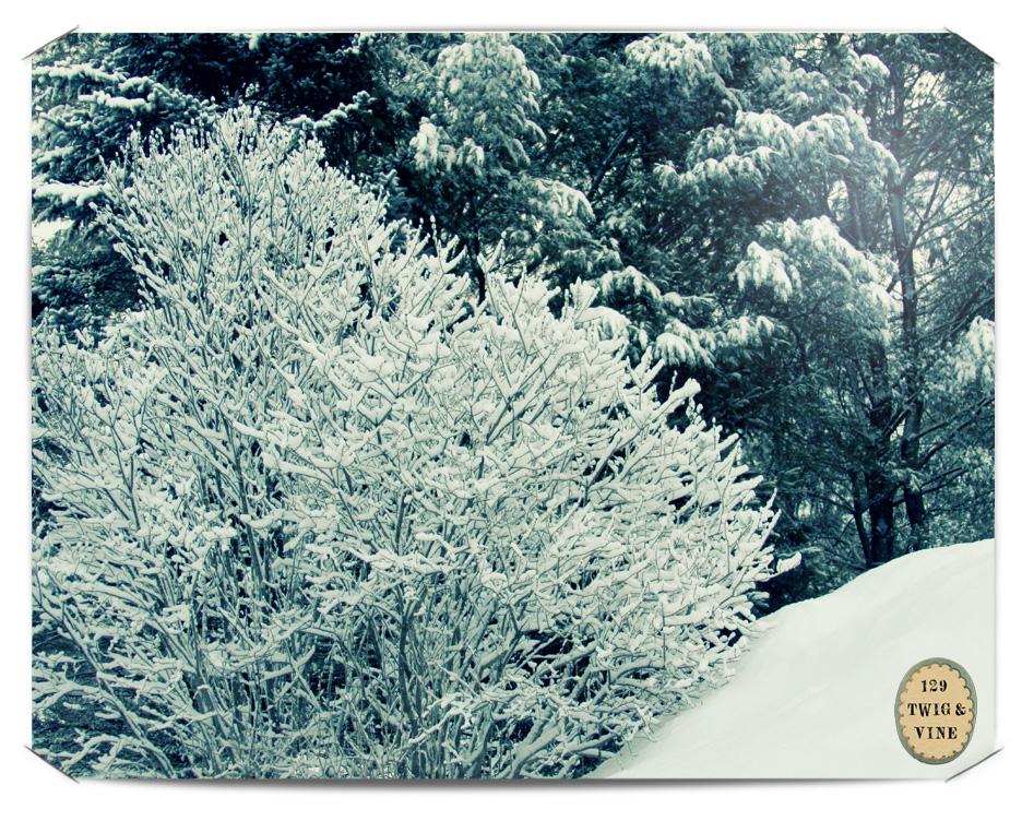 129twigandvine_snow_branches