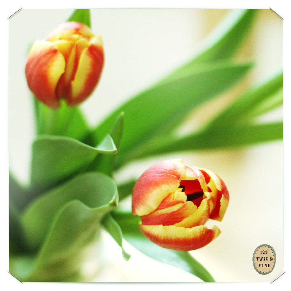 129twigandvine_tulips