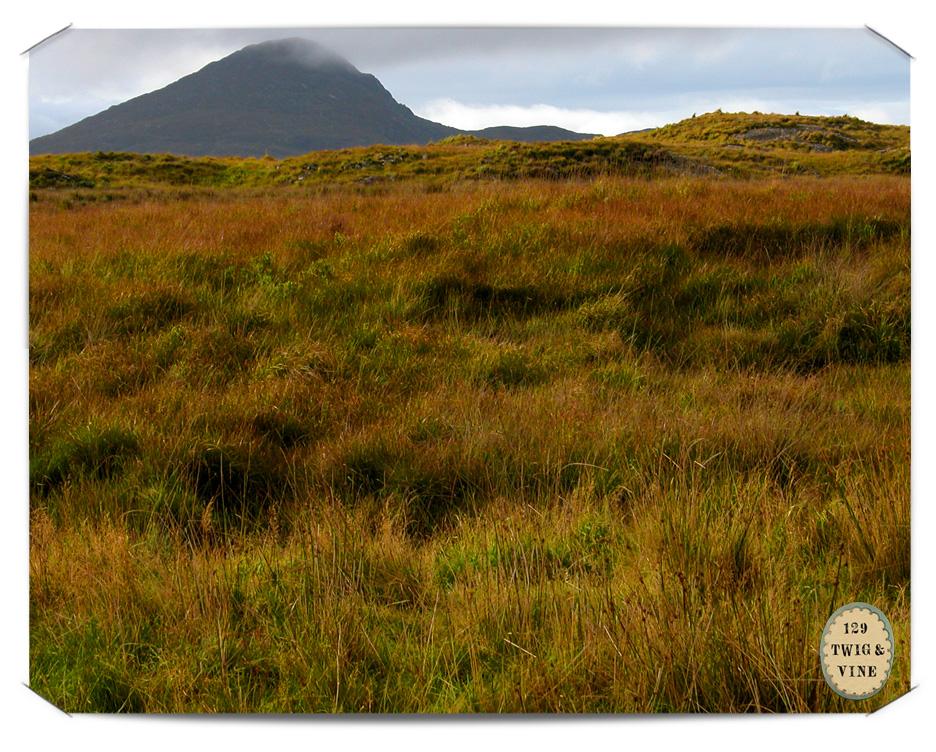 www.129twigandvine.com – Connemara, Co Galway Ireland