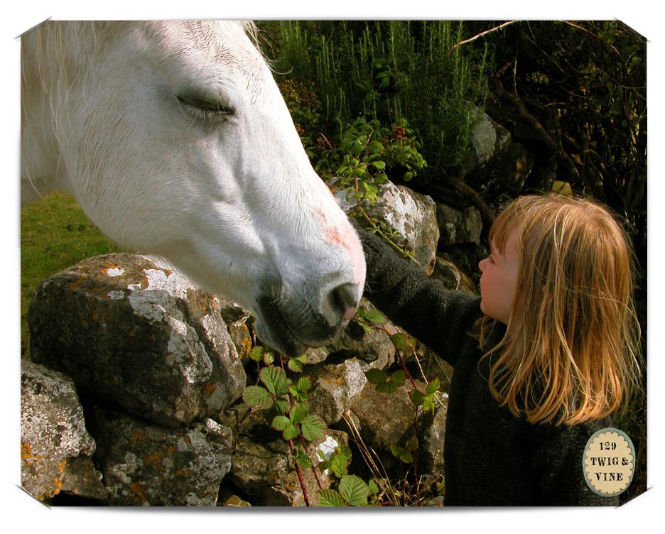 www.129twigandvine.com – Irish horse