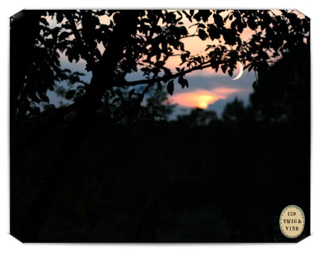 129twigandvine_crescent_moon photography by Sue Schlabach