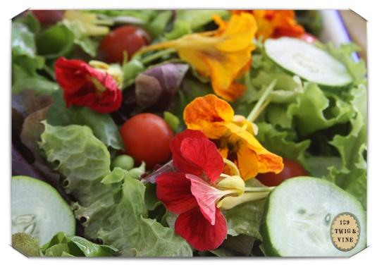 129twigandvine, salad days, photo © Sue Schlabach