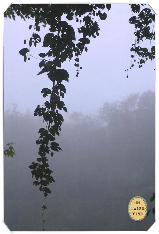 129twigandvine, hop vines. © Sue Schlabach