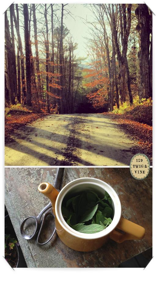 129twigandvine, © Sue Schlabach. Tunbridge, Vermont, road. Fresh mint tea.