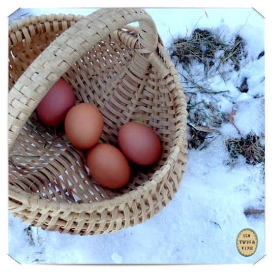 129twigandvine snow and eggs © Sue Schlabach