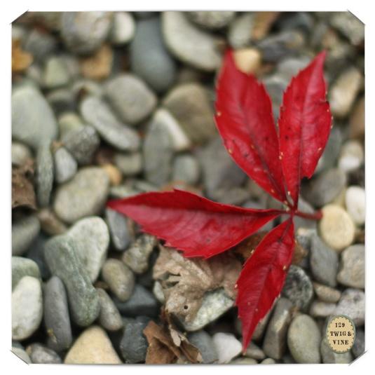 129twigandvine Woodbine leaf © Sue Schlabach