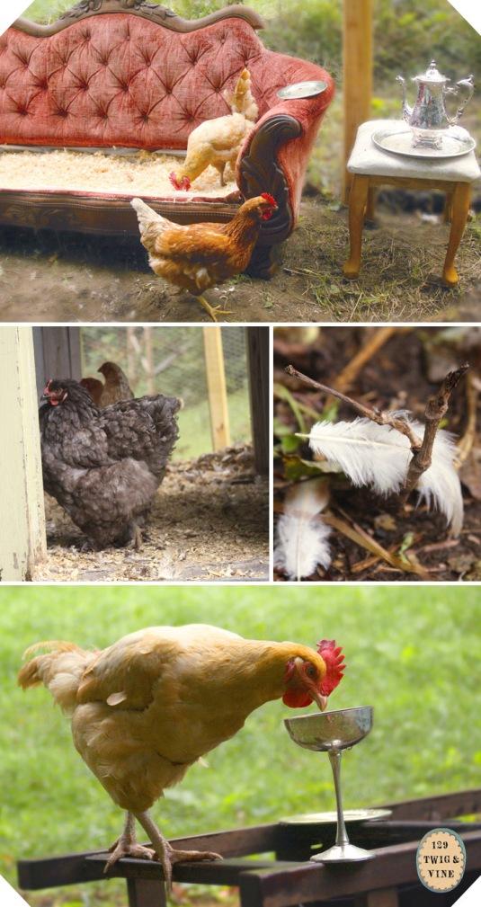 ©Sue Schlabach 129twigandvine Tori's chickens in South Strafford, Vermont