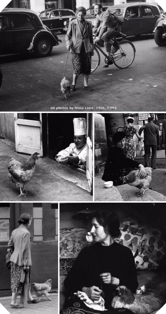 Nina-Leen-Paris-Chicken