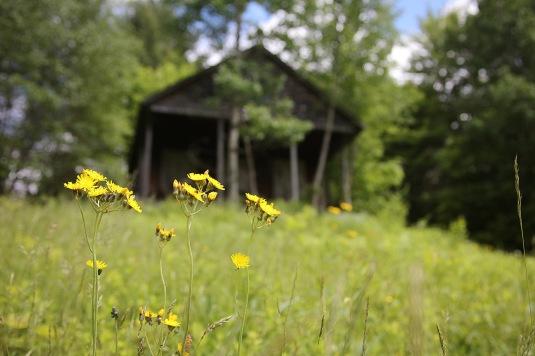 Abandoned Cabin 21 Sue Schlabach